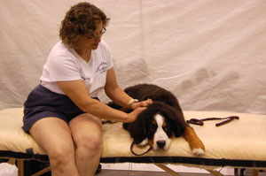 Canine Therapeutic Massage